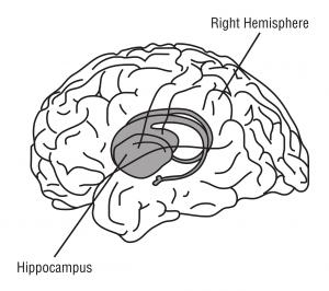 hippocampus-148151_1280