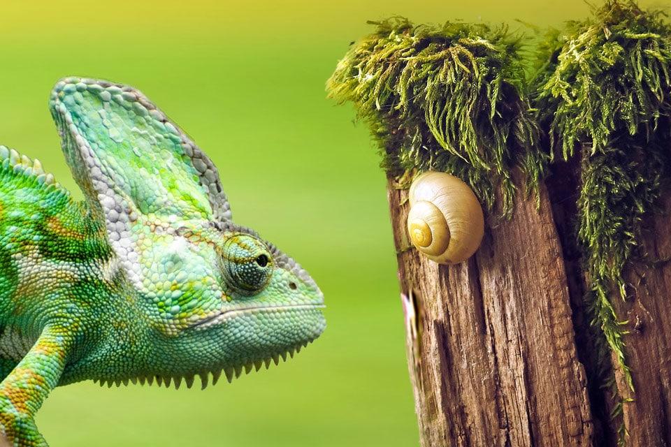Snail and Chameleon